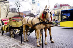 Fracht z pięknym koniem Zdjęcia Royalty Free
