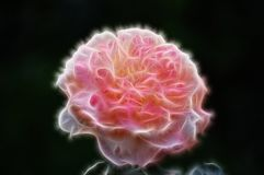 Fractal η εικόνα ενός ρόδινου υφάσματος αυξήθηκε διανυσματική απεικόνιση