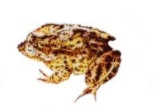 Fractal απεικόνιση βατράχων Στοκ εικόνες με δικαίωμα ελεύθερης χρήσης