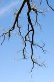 Fractal κλάδοι στον ουρανό Στοκ Εικόνες
