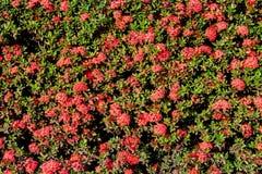 fractal λουλουδιών ανασκόπησης όμορφη εικόνα Στοκ Φωτογραφίες