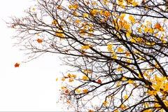 Fractal φύσης Στοκ εικόνα με δικαίωμα ελεύθερης χρήσης