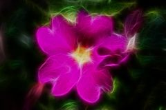Fractal abstract purple flower Royalty Free Stock Images