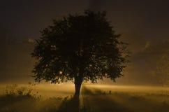 fractal abstrakcyjna nocy obrazu zima Obrazy Royalty Free