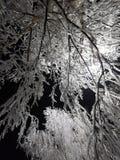 fractal abstrakcyjna nocy obrazu zima Zdjęcia Stock