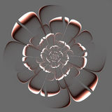 Fractal beige flower on gray background. Royalty Free Stock Image