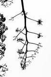 Fractal branch vector illustration