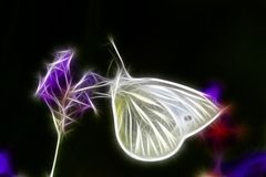 Fractal Butterfly Royalty Free Stock Images