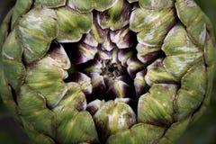 Fractal da alcachofra Fotos de Stock Royalty Free
