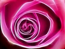Fractal de Rosa Fotografia de Stock