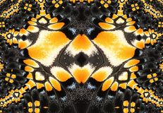 Fractal design. Butterfly wing photo turned into a fractal design Royalty Free Stock Photo