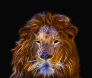 Fractal design of Lion or Panthera leo with beautiful eyes and p Stock Image