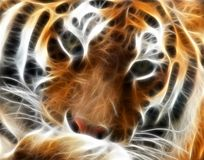 Fractal do tigre fotos de stock