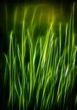 Fractal för grönt gräs, vår Royaltyfria Foton