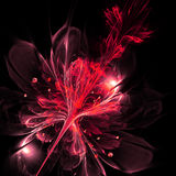 Fractal flower Royalty Free Stock Images