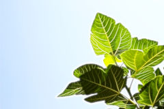 Fractal Green Leaves. Beautiful fractal Green Leaves on a blue Background Stock Image