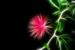 Fractal image of a lush pink tropical acacia flower royalty free illustration