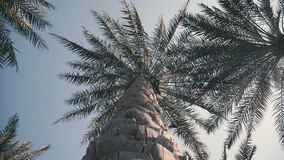 Fractal in nature: branches of palm trees are moving in the wind stock video footage