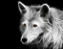 Fractal portrait of a young wolf. With yellow eyes on a contrasting black background royalty free stock photography
