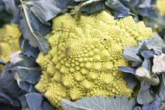 Fractal Romanesco cabbage Royalty Free Stock Photography