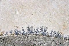 Fractal Steen Royalty-vrije Stock Afbeeldingen