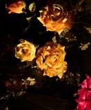 fractal zieleni liść życia wzorzystości talerza czerwone róże wciąż przejrzyste Zdjęcia Stock