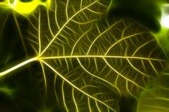 Fractal zieleni liście Obraz Royalty Free