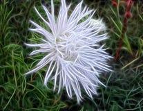 Fractalbild einer weißen Gartenblume - Chrysantheme stock abbildung