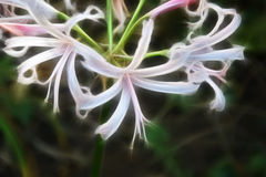 Fractalblomma Royaltyfria Foton