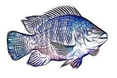 Fractales de los pescados de la Tilapia imágenes de archivo libres de regalías