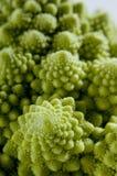 Fractales en nature Photographie stock