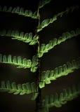 Fractals da samambaia Imagem de Stock