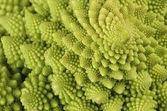 fractals natury posiadać Obraz Royalty Free