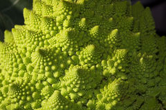 Fractals på en Romanesco broccoli Arkivbilder