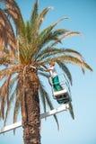 FRACTURA, CROACIA - 10 DE JULIO DE 2017: Sirva las hojas de palma del corte en la salida del sol con una motosierra con el cielo  Foto de archivo libre de regalías