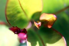 Fractura de la flor verdad Imágenes de archivo libres de regalías