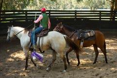 Fractura de un caballo de raza a la silla de montar en la Florida Fotos de archivo libres de regalías