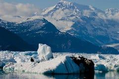 Fractura del hielo de bahía de Columbia del glaciar de Alaska Imagenes de archivo