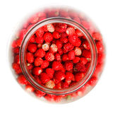 Fragaria vesca, Woodland Strawberry Royalty Free Stock Image