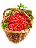 Fragaria vesca, Woodland Strawberry Stock Photo