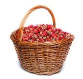 Fragaria viridis, Wild Strawberry Royalty Free Stock Images