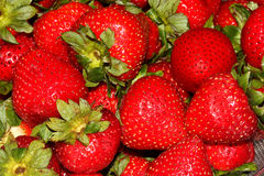 Fragaria x ananassa, Garden strawberry Royalty Free Stock Photography