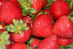 Fragaria x ananassa, Garden strawberry Stock Images