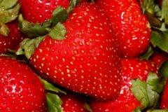 Fragaria x ananassa, Garden strawberry Royalty Free Stock Images