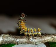 Frage Mark Caterpillar lizenzfreies stockfoto