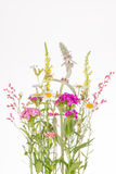Fragile colorful wildflowers Stock Photos