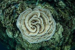 Fragile Coral Colony Stock Photos