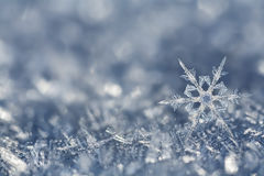 Fragile_Crystals. Digital composite of a snowflake and winter frost Royalty Free Stock Photo