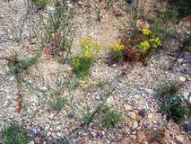 Fragile desert flora Royalty Free Stock Photo