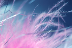 Fragile feathers. Pink fragile feathers in abstract background. soft elegance symbol Stock Images